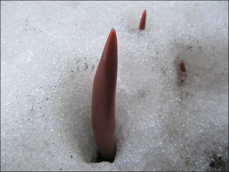 2011_034