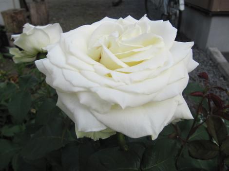 2011_566
